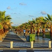 Пальмовый парк :: mikhail