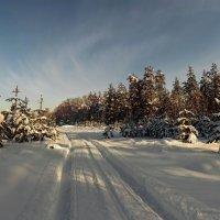 Околдован лес стоит, чудной жизнью он блестит 5 :: Сергей Жуков