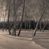 Околдован лес стоит, чудной жизнью он блестит 9 :: Сергей Жуков