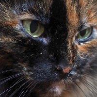 Суровый кошачий взгляд... :: Александр Попов