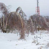 ... и снова зима :: Александр Кудров