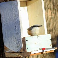 Покормите птичек в холода! :: Андрей Заломленков