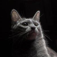 немного о кошках 3 :: alexzonder