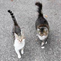 Кошки :: татьяна