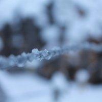 Первые морозы :: Алина Лисовская