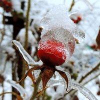 Ледяная корона :: Елена Якушина