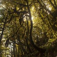 Лес вокруг 33 водопадов :: Юрий Клишин