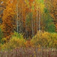 Краски октября! :: Владимир Шошин