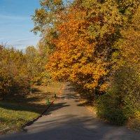 «…А в воздухе ни дуновенья, лишь россыпь листьев золотых…» :: Андрей Нибылица