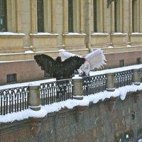 встреча на Зимней канавке :: Елена