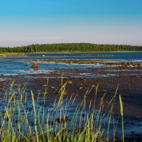 Отлив. Белое море. :: Николай