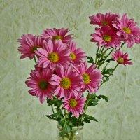 Розовые голландские хризантемы :: Светлана