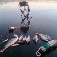 На льду :: Александр Алексеев