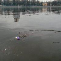 Водная гладь :: Svetlana Lyaxovich