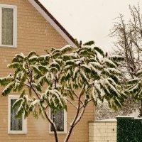 зелень под снегом :: Александр Прокудин