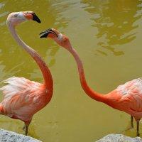 Дитя заката (розовый фламинго). Парижский зоопарк. :: Радий Тен