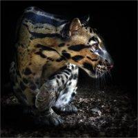 Ночной охотник. :: Александр Назаров
