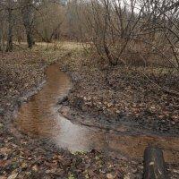 течет ручей извилистой дорожкой :: Михаил Жуковский