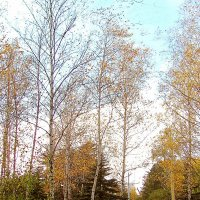 Осенний парк :: super-krokus.tur ( Наталья )