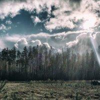 Solitude forest. :: Андрий Майковский