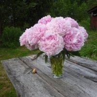 Пионы в вазе на столе :: Татьяна