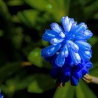 Хороши весной.... :: Юрий