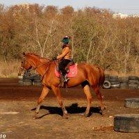 Урок в школе верховой езды :: Нина Бутко