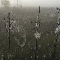 В тумане :: Федор Пшеничный