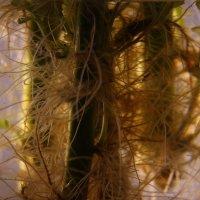 Рассвет на Венере :: veilins veilins