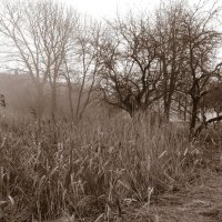 Старый сад 2 :: Юрий Бондер