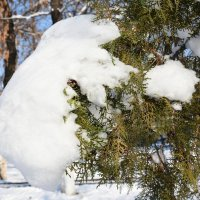 Зима идет... :: Александр Грищенко