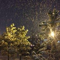 Снег... :: Светлана Ященко