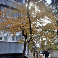 Осенний ветер подгоняет... :: Нина Корешкова