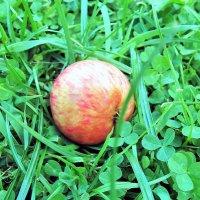 Яблоко на траве :: U. South с Я.ру