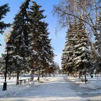 В зимнем сквере :: Андрей Заломленков