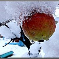 первый  снег. :: Ivana
