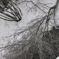 Упавшее дерево :: Дмитрий Никитин