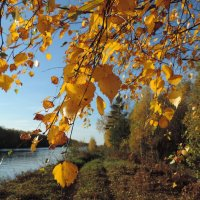 Осень золотая :: Елена Якушина