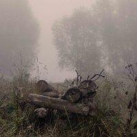 Туман-туманище :: Татьяна Степанова