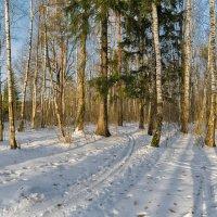 Ноябрьская лыжня... :: Ирина Шарапова