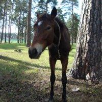 Первая половина лошади Мюнхгаузена (не photoshop) :: NICKIII Михаил Г.