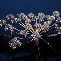 После дождя и морозца. :: Андрей Скорняков