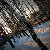 зимнее солнце :: Нина Алексеева