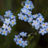 цветы :: Valery