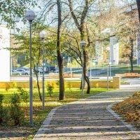 Осень в парке :: Roman Rez
