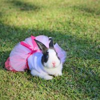 bunny girl :: Natalya секрет