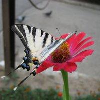 Бабочка в городе :: Алексей Гришанков (Alegri)