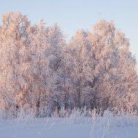 Розовая зима :: Андрей Прохоров