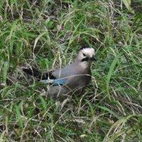 Любопытная птичка :: татьяна