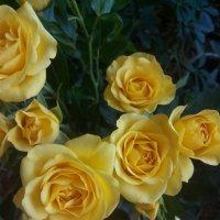 цветы :: anita es